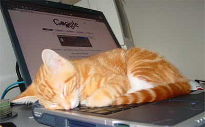 GoogleCat